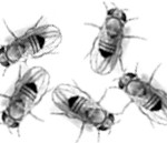 Empirical validation of pooled whole genome population re-sequencing in Drosophila melanogaster